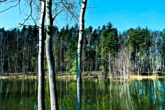Stawy w okolicach Arboretum bramy Morawskiej